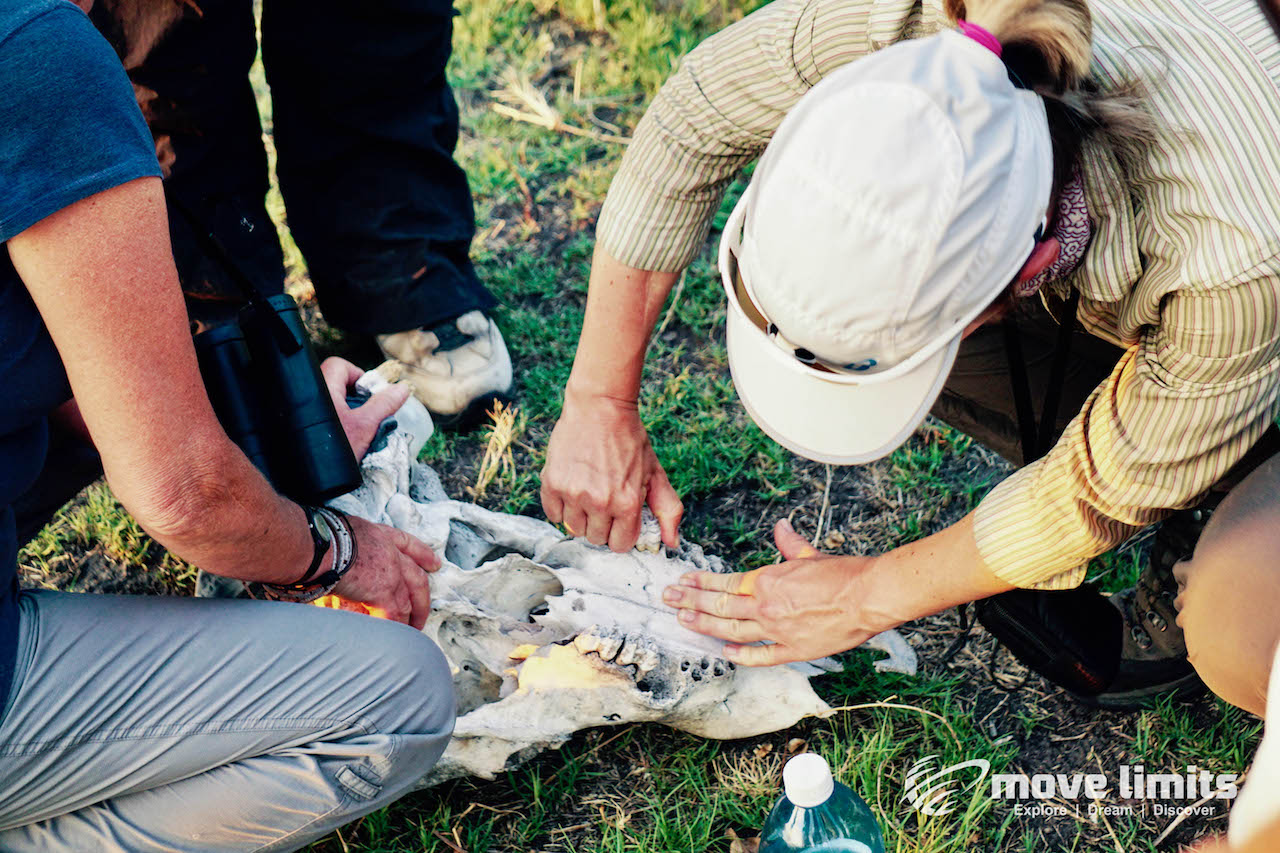 Zwei Tage im Delta des Okavango in Botswana - Ein altes Gebiss - movelimits.de