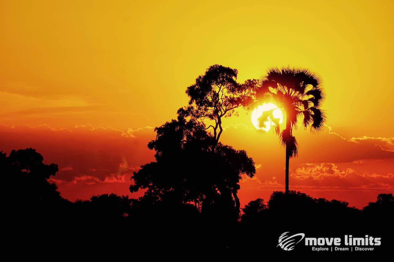 Zwei Tage im Delta des Okavango in Botswana - Sonenuntergang hinter Palmen