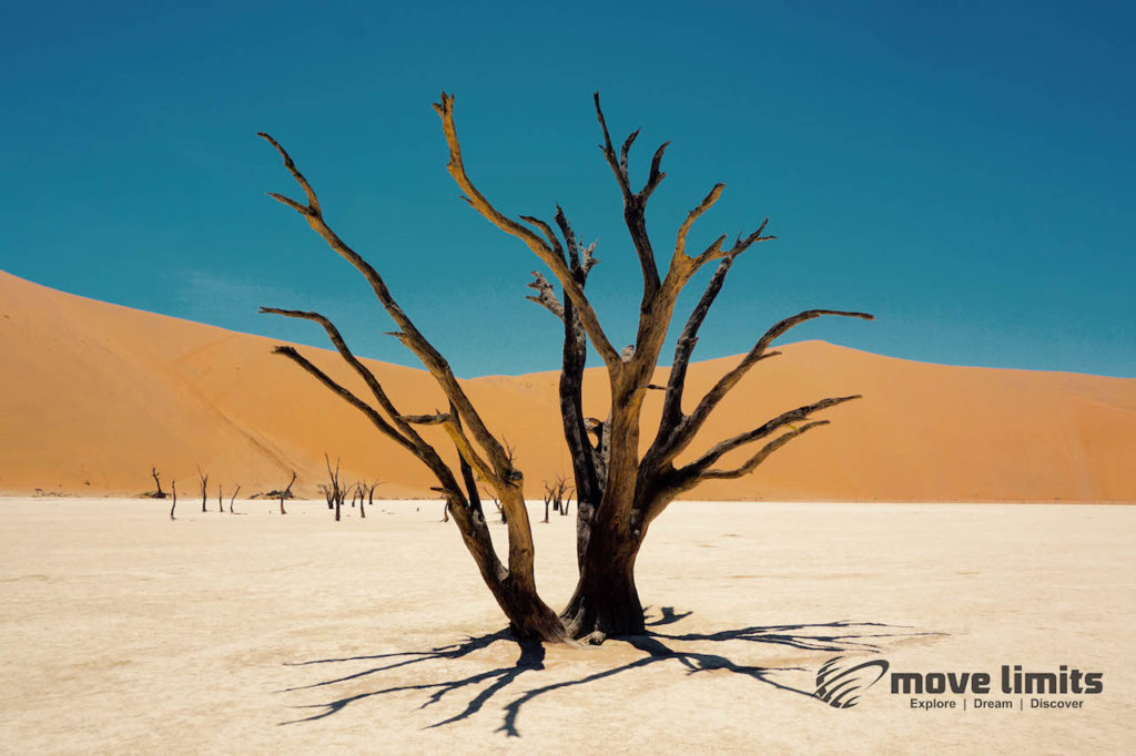 Im Sossusvlei in Namibia - Death Valley - Dead Vlei - movelimits.de