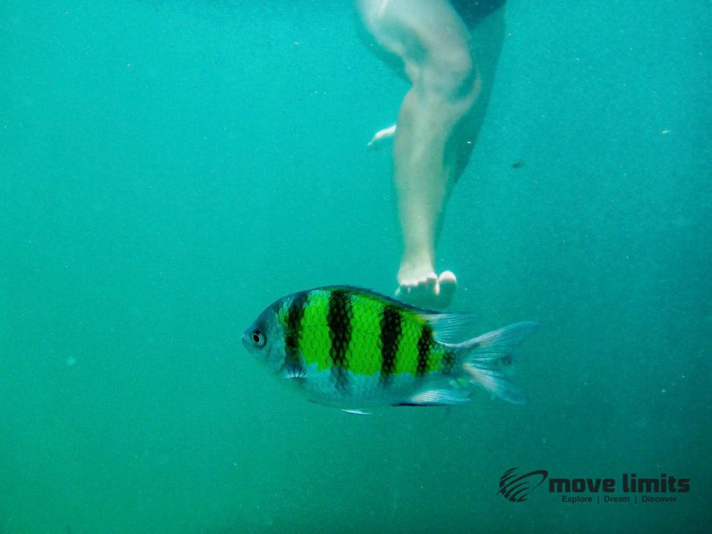 Schnorcheln im Paradies - Krab Thailand - Nicht auf die Fische treten - movelimits.de