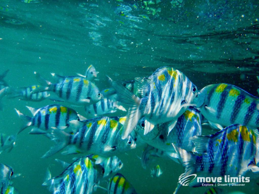 Schnorcheln im Paradies - Krabi Thailand - Fische - movelimits.de