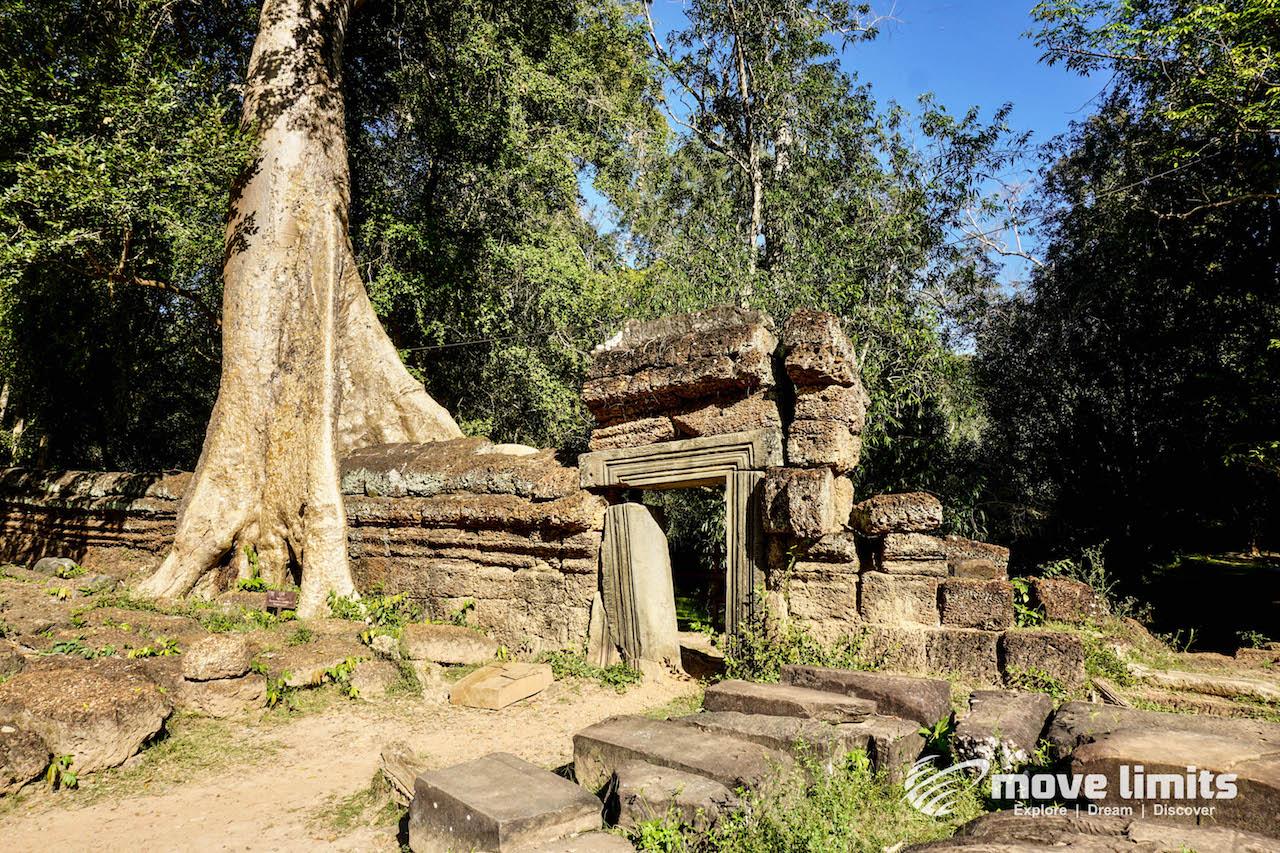 Angkor Thom und Angkor Wat - movelimits.de - Ta Prohm Die Natur kehrt zurueck