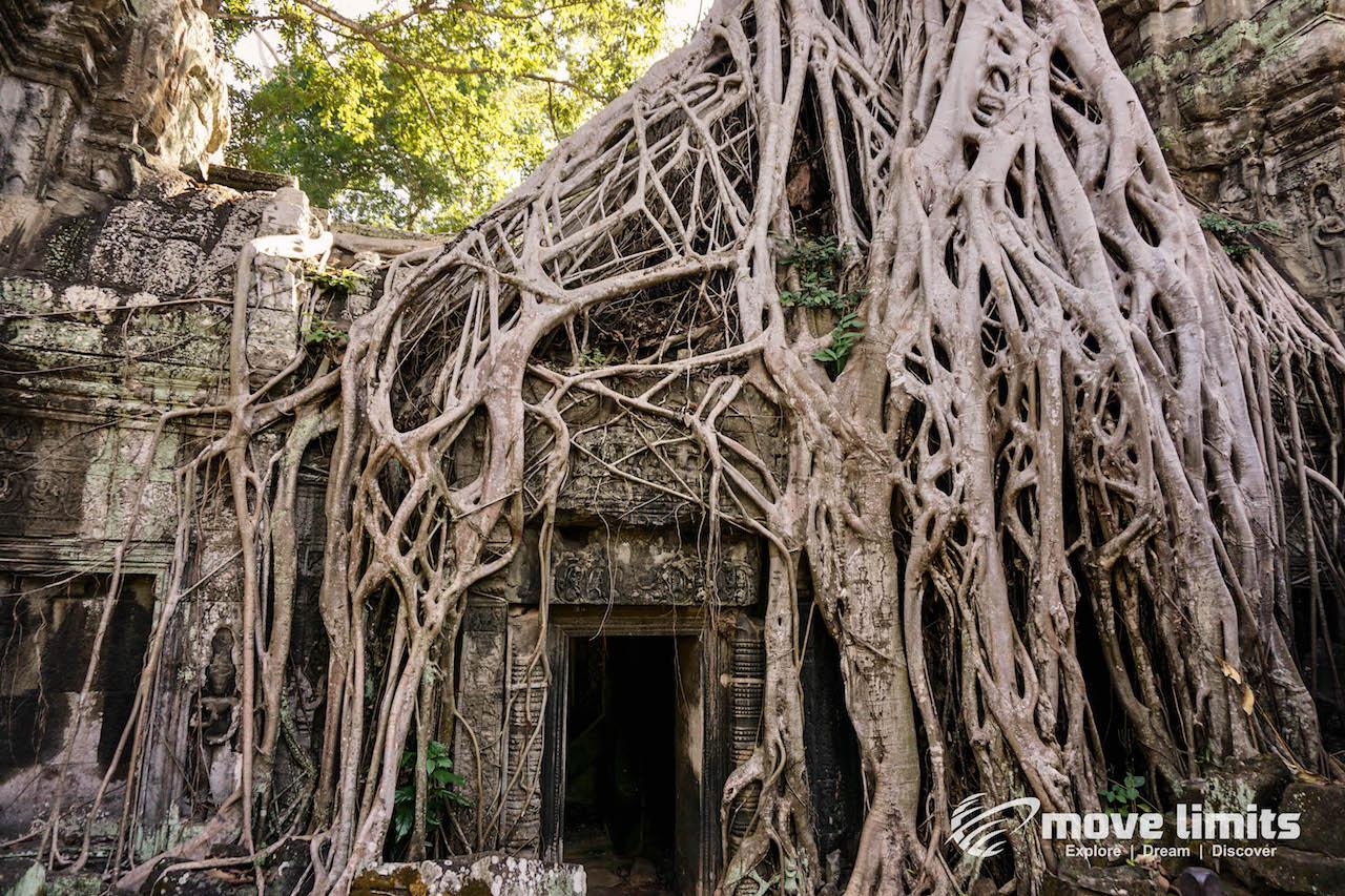 Angkor Thom und Angkor Wat - movelimits.de - Ta Prohm aus Tomb Raider